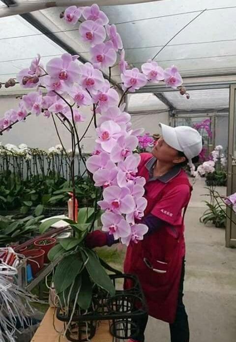 Orkide resmi / Orkide görselleri