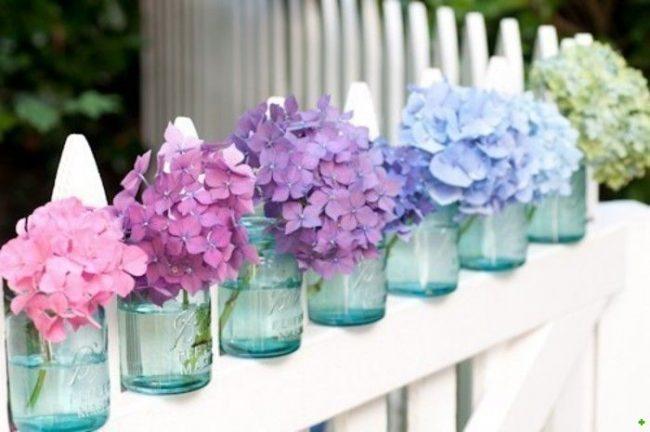 Ortanca çiçeği renkleri