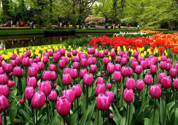 En Güzel Çiçek Fotoğrafları