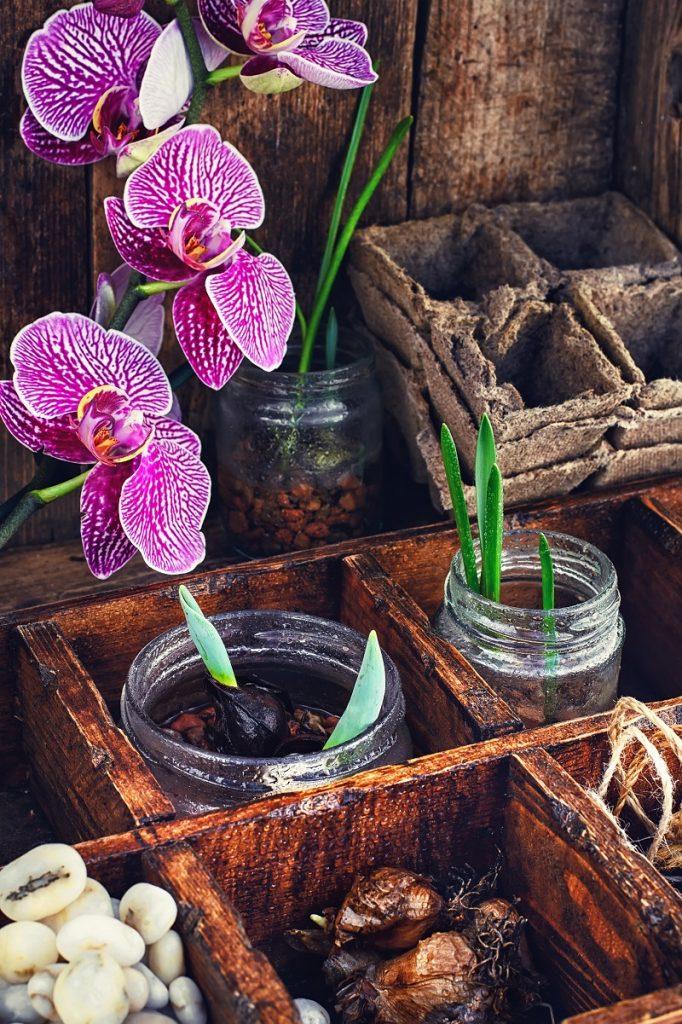 Orkidelerin çiçek açma süreleri