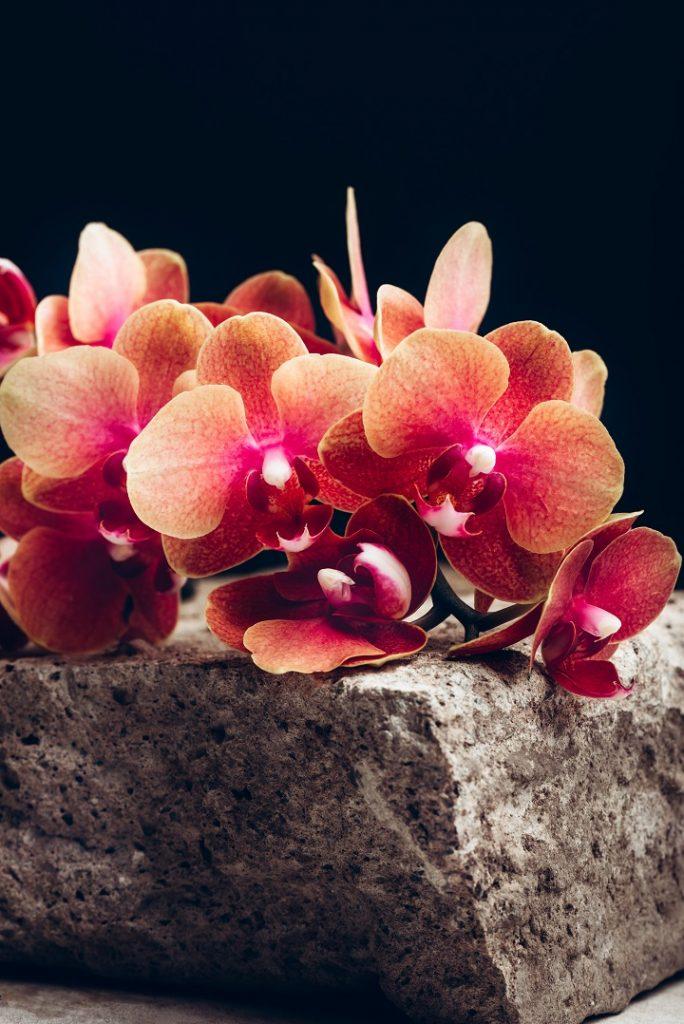 Turuncu Orkide Anlamı