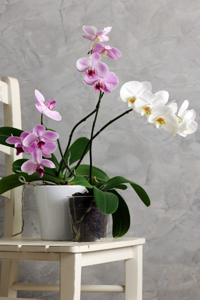orkide için saksı ölçüleri