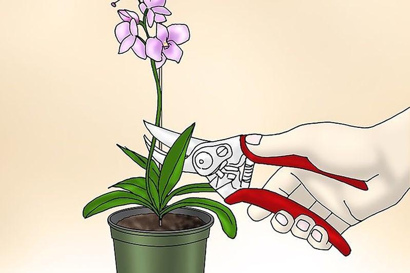 orkide nasıl budanır